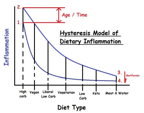 Inflammation_Diet_Hysteresis_Model_1